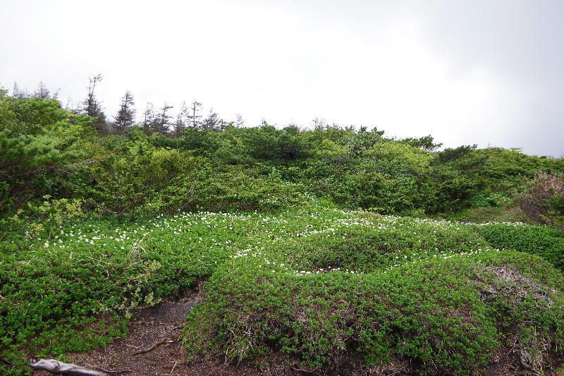 chinguruma6.jpg